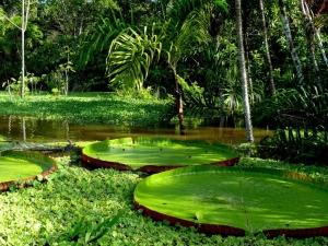 Отель в пять звезд на реке Амазонке