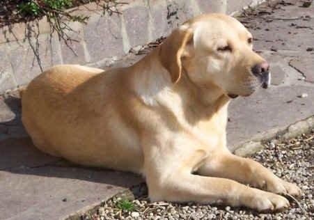 Собака-терапевт лечит маленьких пациентов