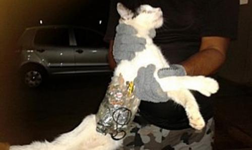 Кошка проносила в тюрьму мобильные телефоны, флешки и острые предметы